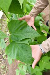 NP-seed regeneration Popayan 9
