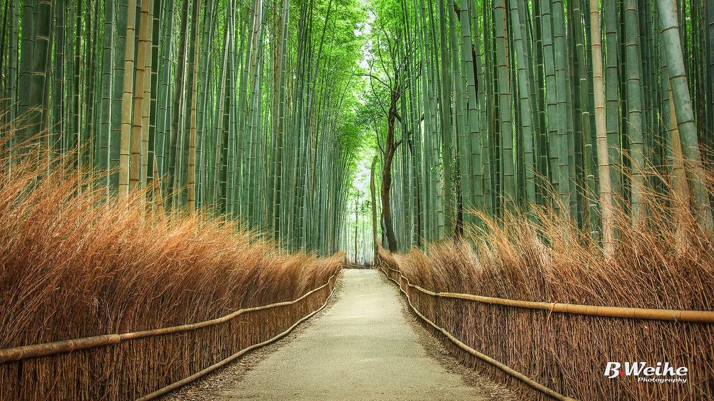 Image result for bamboo forest after storm