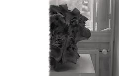 Mammoth II (Hf-Photo) Tags: analog analoog analogfeatures analogcommunity analoque filmphotographer filmshooters filmcommunity filmisalive filmisreal 35mm 35mmfilm blackandwhite filmfeatures filmisnotdead filmisch