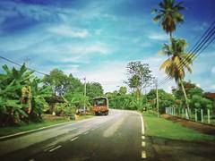 Kampung jelatang alor gajah - http://4sq.com/roCM6L #green #nature #tree #grass #travel #holiday #holidayMalaysia #travelMalaysia #Asian #Malaysia #Malacca #大自然 #旅行 #度假 #马来西亚旅行 #马来西亚度假 #亚洲 #马来西亚 #发现马来西亚 #自游马来西亚 #马六甲 #花草树木