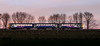 Chasing a Pacer Sunset (Andrew Shenton) Tags: 144017 sunset pacer methleyjunction leeds sheffield winter panning