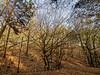A Touch of Sun in December Forest (Petr Horak) Tags: forest wood woodland tree beech birch winter brown golden branch wideangle olympus omd em1novýknínstředočeskýkrajczechiacze