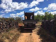 "AGP Wood Sales GWD Forestry Eucalyptus project Brazil <a style=""margin-left:10px; font-size:0.8em;"" href=""http://www.flickr.com/photos/47172958@N02/39403785712/"" target=""_blank"">@flickr</a>"