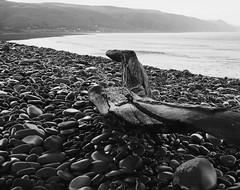 Bossington black and white (Hammerhead27) Tags: blackandwhite bw exmoor contrast curve england somerset bossington winter wet grey monochrome driftwood wood stones beach pebbles coast