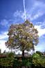 The poetic world. (lakeside_cat) Tags: ultrawideheliar12mmf56asphericalii underthetree blue bluesky tree doll flowerpot poetic 青空 空 木 雲 植木鉢 人形 cloud under sky 空の下 landscape shiga 風景 滋賀