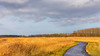 Bike path through the reeds (BraCom (Bram)) Tags: 169 bracom bramvanbroekhoven dirksland goereeoverflakkee holland nederland netherlands newyear nieuwjaar bicyclepath bomen cloud fietspad landscape landschap polder reed riet road sky sunny trees weg widescreen winter wolk zonnig zuidholland nl tranquility rust