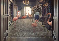 Mindfulness for beginners (nikolina petolas) Tags: photography animals petolas nikolinapetolas digitalart surreal surrealism fineartprints print flamingo giraffe castle palace rococco