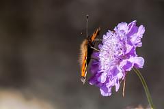 A Meeting Within Negative Space (Neil B's) Tags: summerbutterflyflowerwarmbeautylightdof sun summer focus negative space garden back mum