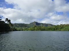 Wailua River State Park - Fern Grotto (68) (pensivelaw1) Tags: hawaii kauai wailuariverstatepark ferngrotto