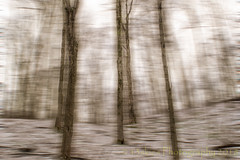 Infused Forest (HSS) (13skies) Tags: hss blur blurred effects photoshop elements layermask postprocessing playing technique illusion artistic creative slidersunday happyslidersunday slider trees alpstrail snow winter colder barren woods
