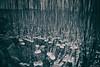 AY6A5635 (fcruse) Tags: cruse crusefoto 2018 vinter canon5dmarkiv natur landscape nature vågor vatten water drop droppe vattendroppe waterdrop longexposure stockholm sweden se