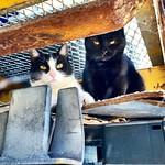 La madre con su peque (que ha salido al padre de negro y borde) #gatos #gatoscallejeros #cats #photocats #instacats #neko #meow #gatze #gatto #koshka #catsofworld #catsofinstagram #streetcats #chat #blackcat #gatonegro thumbnail