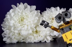You Wall-E (Skyline:)) Tags: getoutofmypicture flickrfriday toy minifigure flowers white yellow flickr friday flower macro close up 7dwf