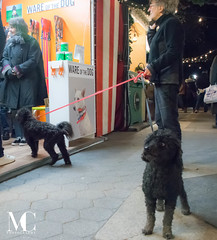"""That Dog Knows How to Pose!"" (matthewcohen93) Tags: newyorkcity nikon nikond7100 nyc nycphotography nyclandmarks newyork new photography columbuscircle holiday christmas christmas2017 nightphotography newyorkatnight color streetphotography naturallight christmasshops holidayshops christmasinnyc christmasinnewyork holidaysinnewyork holidaynewyork happyholidays 2017 noflash"