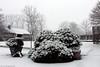 Winter is coming .... (Rick & Bart) Tags: winter snow garden tuin nature hasselt sintlambrechtsherk home rickvink rickbart canon eos70d