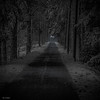 dark road (sami kuosmanen) Tags: suomi syksy autumn tree talvi kuusankoski kouvola nature north europe exposure expression luonto light landscape photography puu finland forest dark road tumma trees tie
