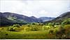 Green Irish Valley (marcus juettner) Tags: gapofdunloe irland licht tal countykerry ie valley trees bäume ireland ligh