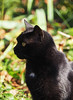 Jesień Herbst autumn Autunno Jesen (arjuna_zbycho) Tags: jesień herbst autumn autunno jesen felix blackcat tuxedo tuxedocat kater hauskatze cat animal cute animals pets gato kitten feline kitty kittens pet tier haustier katzen gattini gatto chat cats kocio