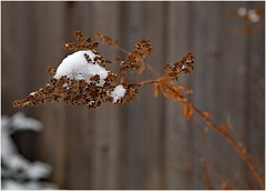 171222 New Snow (15) (Aben on the Move) Tags: snow winter toronto canada ontario
