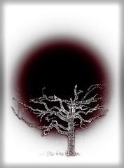Missouri Botanical Garden (Michael Shoop) Tags: michaelshoop stlouis saintlouis missouri usa tree japan japanesegarden night winter canon canon7dmarkii christmas christmaslights missouribotanicalgarden gardenglow