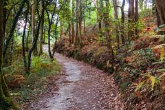 El Camino a Fisterra (Manuel Gayoso) Tags: santiagodecompostela caminodesantiago caminoafisterra galicia españa helechos