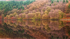 End of Autumn (G-WWBB) Tags: ladybower ladybowerreservoir reservoir reflections reflect reflecting hopevalley peakdistrict peaks waterfront trees orange green autumn nd water landscape