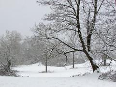 Winter in Vancouver, WA (Jeff Hollett in Vancouver, WA) Tags: winter vancouver washington pacificnorthwest snow trees
