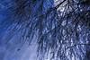 Winter Moon (bethrosengard) Tags: bethrosengard photomanipulation digitallyenhanced photoart digitalmagic digitalart
