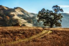 (Abel AP) Tags: mountains tree grasslands landscape nature outdoor sunolregionalwilderness alamedacounty california usa northerncalifornia ebparksok eastbayregionalparkdistrict abelalcantarphotography