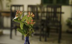 Slowly (@CuongDo) Tags: flower flowers indoor light life hoa xưa cũ 1975s 1975 vn vietnam a7m2 a7mark2 sony pentaxm mfsmcpentaxm mf background bokeh