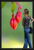 Framing The Shot (swong95765) Tags: begonia flower buds red reddish pinkish frame woman step inside bokeh