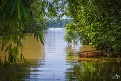 Guyane Amazonie (alain_did) Tags: ombres reflets nature guyane amazonie jungle tourisme evasion relaxation bambous