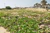 Cabo Verde (Michał Kniotek) Tags: cabo verde wyspy zielonego przyladka wyspyzielonegoprzyladka sal santa maria santamaria