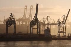 Harbour Hamburg (Elbmaedchen) Tags: light misty feeder hamburgerhafen hafenkräne tollerort gegenlicht diffus lichtstimmung hafen diesig
