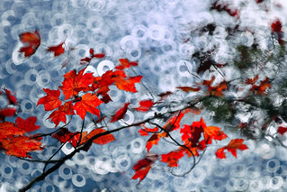Autumn Leaves on Shimmering Bokeh
