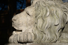 lion 2 (Ihor Hlukhoi - intui.pro) Tags: outdoor ukraine lviv architecture art city ancient house tree road building landscape statue animal