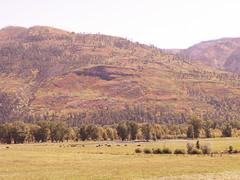 Colorado, colors, cattle (SheilaMink) Tags: mountains sky trees fences colorado colors cattle rocks poles pond shadows sunlight bushes dirt autumn sooc nopostprocessing