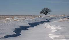 Squiggly Leading Line (Len Langevin) Tags: alberta canada minimal barren snow drift landscape tree shadow winter nikon d7100 tokina 1224