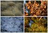 Patterns of Carso (Miyara Sohsai) Tags: carso leaves grass oak pine ice composition 2x2 patterns closeups