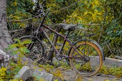 cycle (akashunnikrishnan) Tags: cycle classic vintage hdr contrast green nature photography love canon beauty black india vehicle