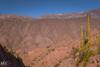 Cardón (Mariano Colombotto) Tags: tilcara jujuy argentina landscape paisaje nature naturaleza cardon travel tourism panoramic mountains montañas viaje nikon photographer photography ngc