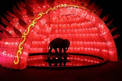 China Light ZOO Antwerp 2017-2018 (1st series) (jackfre 2) Tags: belgium antwerp zooantwerp chinalight show lightshow chinalightshow20172018