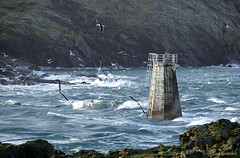 52 Weather (manxmaid2000) Tags: weather storm waves sea birds island eleanor isleofman gull blackheadedgull coast ocean sound calf water manx iom calfofman thousla wind gale rocks rocky cliff cold winter season current windy lighthouse uk british tower gulls rough
