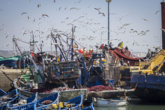 Essaouira, Morocco (Renatas Repčinskas Photo) Tags: morocco essaouira birds ships travel traveling canon eos 600d summer lietuva lithuania sea fisher boat sunny photography