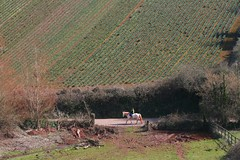 34 (outandaboutindevon) Tags: torquay devon coast path cliffs downs babbacomb ellacomb oddicomb cockington thatch palm tree sea shore thatchers rock beach
