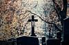 R.I.P. - Friedhof Hernals (macplatti) Tags: xt2 xf55200mmf3548rlmois photomorphis rip cemetery friedhof tod death remember erinnerung cross black blackcross schwarz schwarzeskreuz wien vorarlberg austria aut