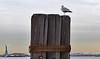 Battery Park Seagull (Sage Girl Photography) Tags: seagull batterypark hudsonriver statueofliberty dock nyc winter december newyork outdoors sagegirl nikond3300