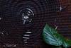 Bois (baptiste.lasnier) Tags: bois rondin arbre mort feuille marron vert végétal contraste nature pensées cernes rond circulaire tronc anneau