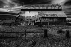 Decomposing America #45 (Perry J. Resnick) Tags: 2017 pjresnick palousewa perryjresnick pjresnickgmailcom pjresnickphotographygmailcom ©2017pjresnick ©pjresnick nature light fuji fujifilm atmosphere atmospheric digital shadow texture shadows angle perspective naturallight white xf fujinon resnick outdoor rectangle rectangular sky clouds xpro2 fujifilmxpro2 washington 16mm fujinon16mmf14 fuji16mm decomposingamerica grass wood decomposing barn abandoned palouse easternwa fence field building decay deteriorating decaying 4x6 noir blackwhite monochrome monochromatic blackandwhite bw