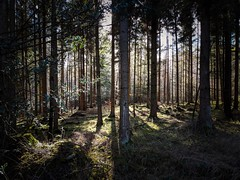 Light 18 - Google Pixel 2 (Andreas Voegele) Tags: googlepixel2 google pixel2 pixel light andreasvoegelephoto forest search